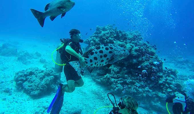 Lizard Island, Diving