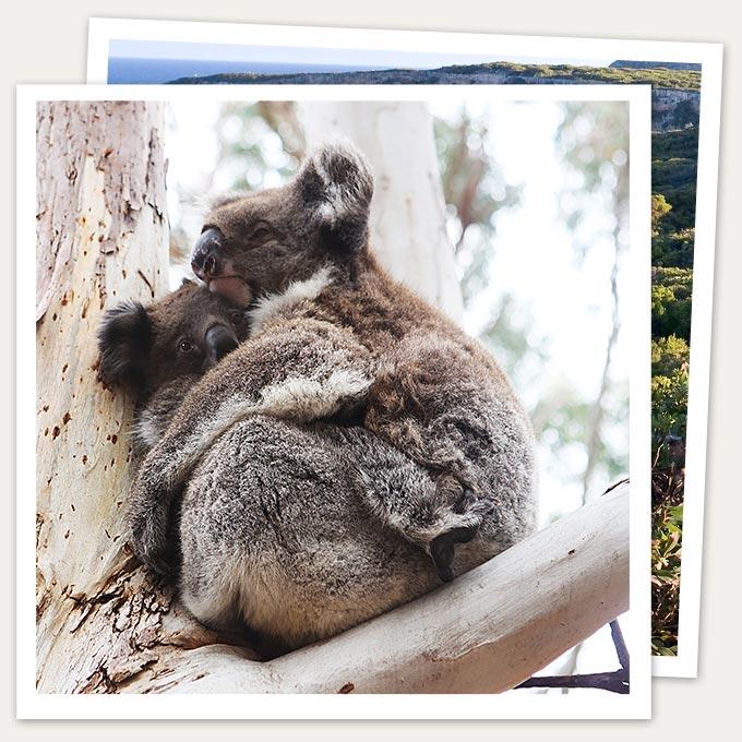 Kangaroo Island: Where Is Kangaroo Island? Facts