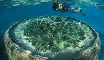 Marine diversity and beauty