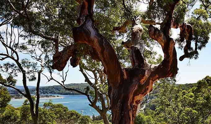 Sydney Surrounds