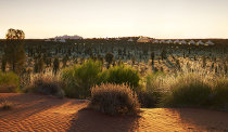 Desert Luxe