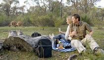 Breakfast with the Kangaroos