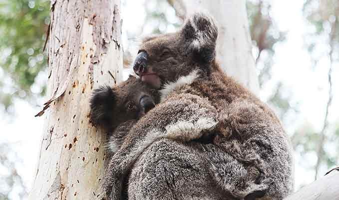 Uniquely Australian Wildlife