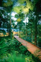 Silky Oaks Lodge - The Daintree - Boardwalk - Click to view larger version