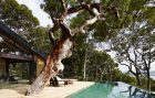 Pretty-Beach-House_Bouddi-Peninsula_Infinity-Pool-Tree - Click to view larger version