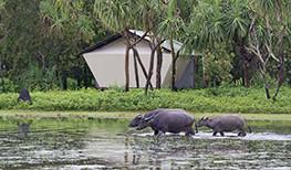 Australian Luxe Safari
