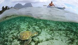 Capella Lodge Turtle
