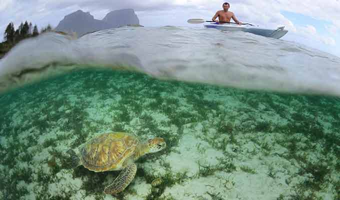 Turtle Encounters