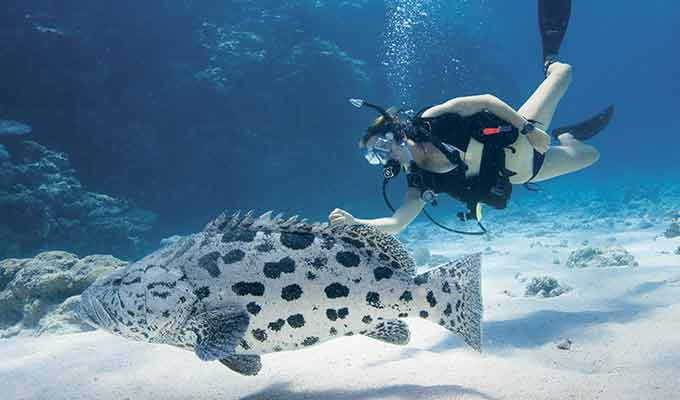 Lizard-Island_Great-Barrier-Reef_Dive680x400
