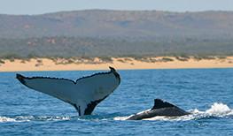 Sal Salis Whale Tail