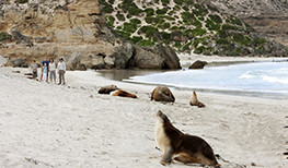 Southern Ocean Lodge Seal Bay
