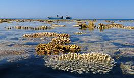 True North Coral Shallows