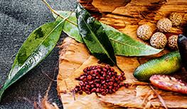 Indigenous Inspired Cuisine