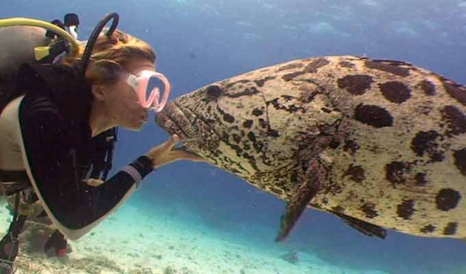 Lizard-Island_Great-Barrier-Reef_Swimming-with-Cod680x400