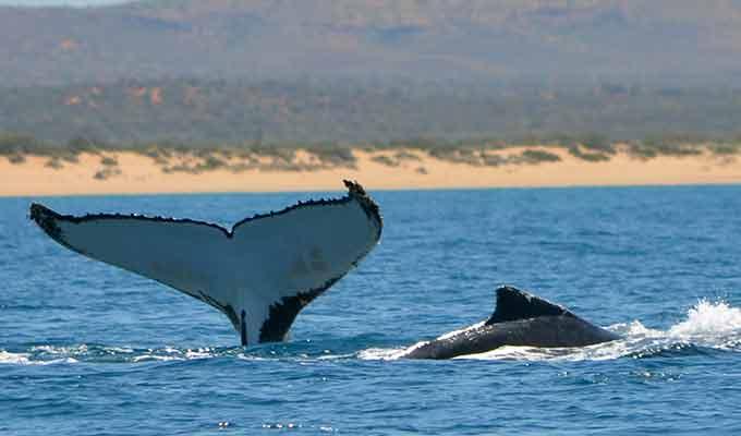 Sal-Salis_Ningaloo-Reef_Whale-Tail680x400