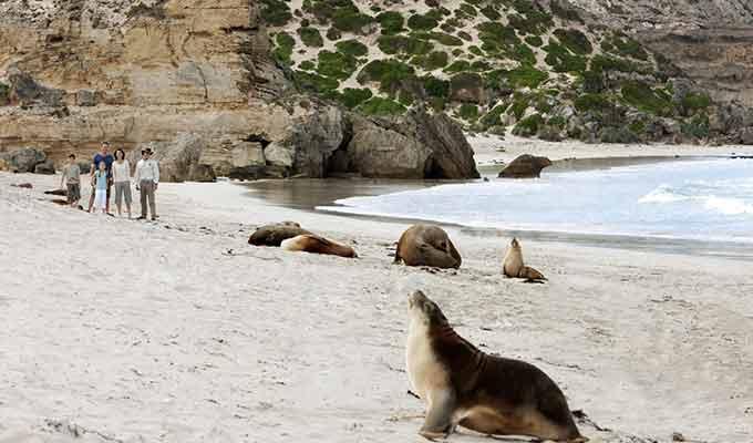 Southern-Ocean-Lodge_Kangaroo-Island_Seal-Bay-Group680x400