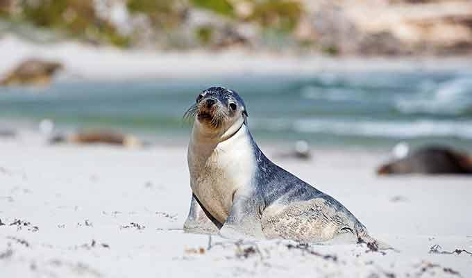 Southern-Ocean-Lodge_Kangaroo-Island_Seal-Bay680x400