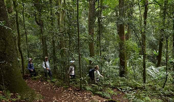 Spicers-Peak-Lodge_Scenic-Rim_Bushwalking680x400