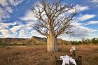 El-Questro-Homestead_The-Kimberley_Boab-Tree-Dining - Click to view larger version