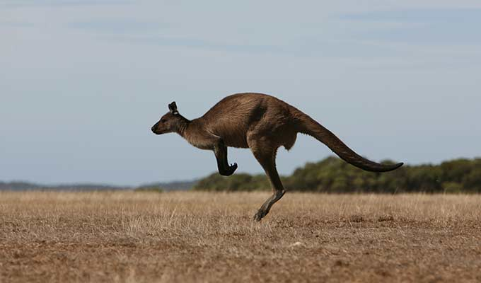 Hop on the Flying Kangaroo to Southern Ocean Lodge