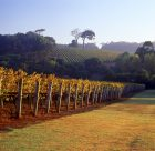 Cape-Lodge_Margaret-River_Vineyards - Click to view larger version