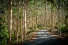 Cape-Lodge_Margaret-River_Winding-Road-Forest - Click to view larger version