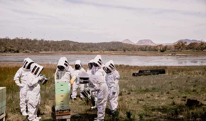 Saffire Freycinet Launches New Beekeeping Experience