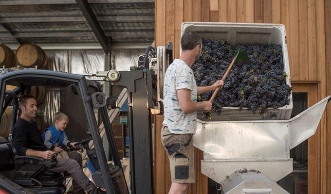 A Backstage Pass to a Genuine Barossa Vintage