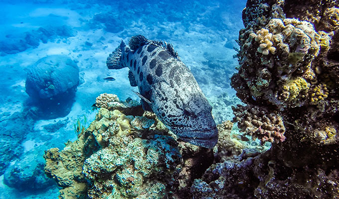 Lizard Island Expeditions 2019