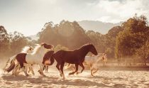 Emirates-One&Only-Wolgan-Valley_Blue-Mountains_Horses680x400
