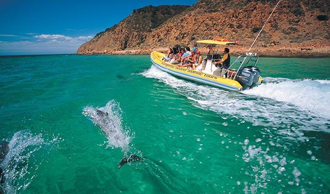 Kangaroo Island Dolphin Experience