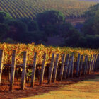 Cape-Lodge_Margaret-River_Autumn-Vineyard-Views680x680 - Click to view larger version