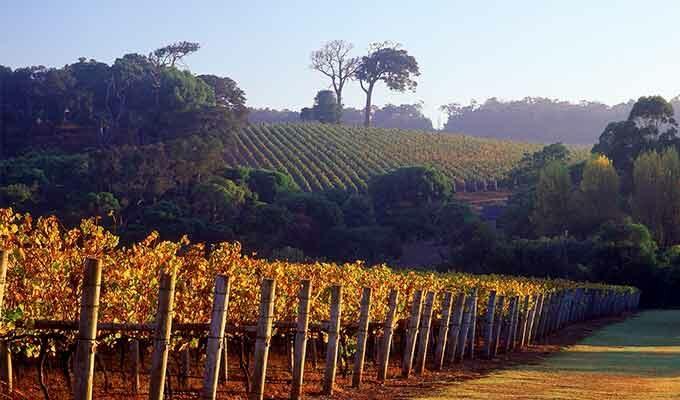 Estate Vineyard Tour + Tasting